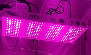 How to Choose the Best LED Grow Light