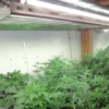 Best T5 Grow Lights for Growing Cannabis