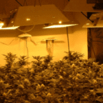 Indoor Marijuana Cultivation - grow weed at home