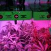 MarsHydro Reflector series LED grow light