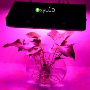 OxyLED - led grow light review