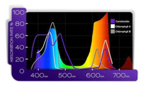 PAR spectrum of a full spectrum LED grow light - KIND LED