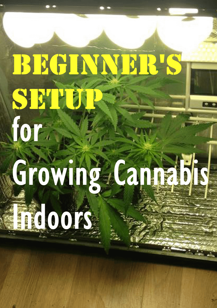 Best Grow Tent For Growing Cannabis 2017 Reviews Amp Guide