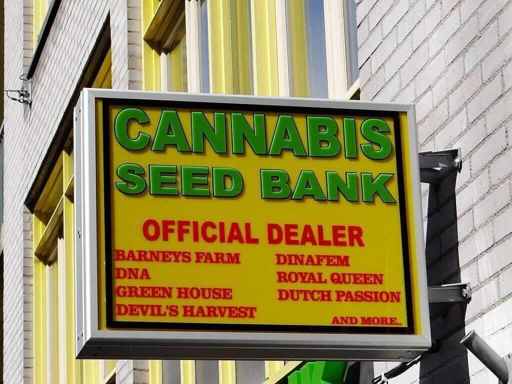 Cannabis seed bank Amsterdam