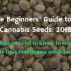 How to buy marijuana seeds for beginners