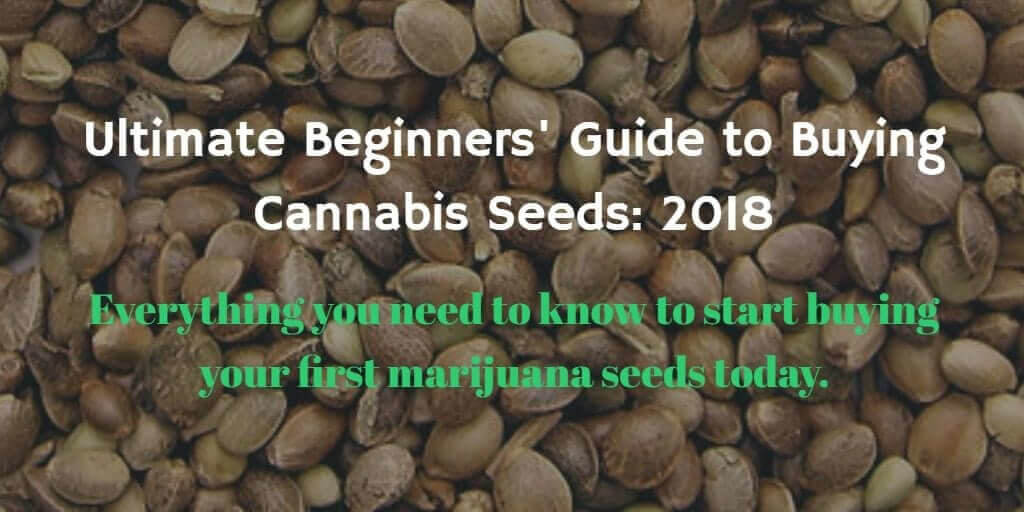 How to buy marijuana seeds for beginners