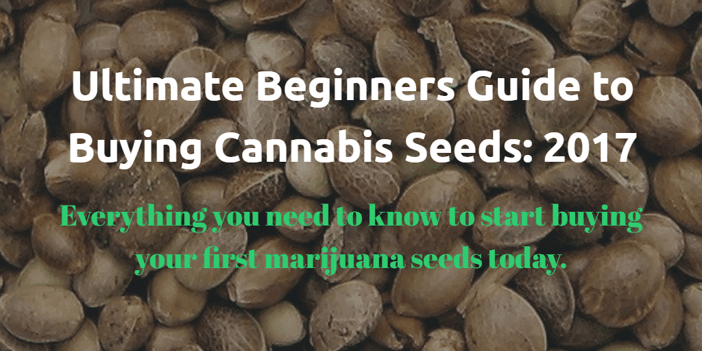 Buying marijuana seeds - Ultimate Guide for Beginners 2017