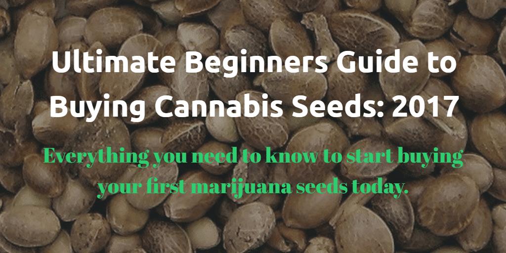Buying marijuana seeds - Ultimate Guide for Beginners 2017