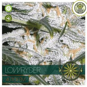 Lowryder cannabis seeds - Seedsman