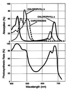 PAR spectrum - photosynthetically available radiation