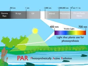 Photosynthetically Active Radiation (PAR)