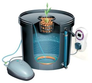 deep water culture dwc hydroponics bucket system for growing cannabis