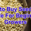 seed buying guide for beginners