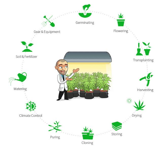 bergmans lab grow course - screenshot