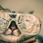 Cool for cats - cbd oil for pets