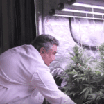 cannabis scientist with crop