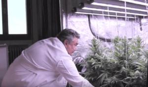 cannabis scientist with crop