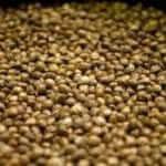 best-cannabis-seeds-on-sale-