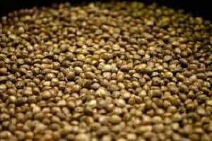 best-cannabis-seeds