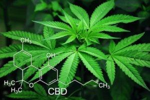 Seniors medical marijuana benefits