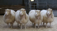 dolly the sheep clones