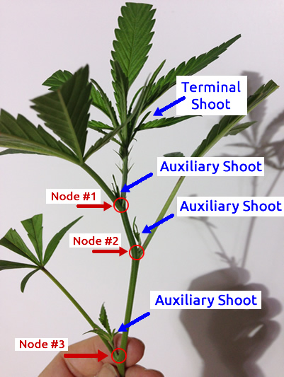 A strong cutting with nodes labeled