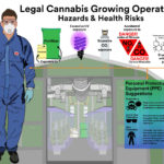 cannabis occupational hazard infographic