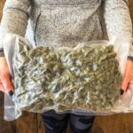 big bag of weed buds