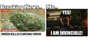 Weed does not kill coronavirus