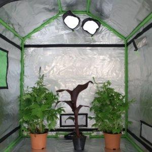 Hydroponics Indoor Grow Tent Room