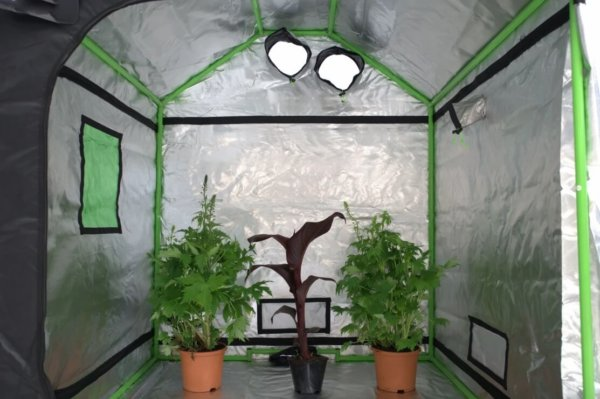 Hydroponics Indoor Grow Tent Room